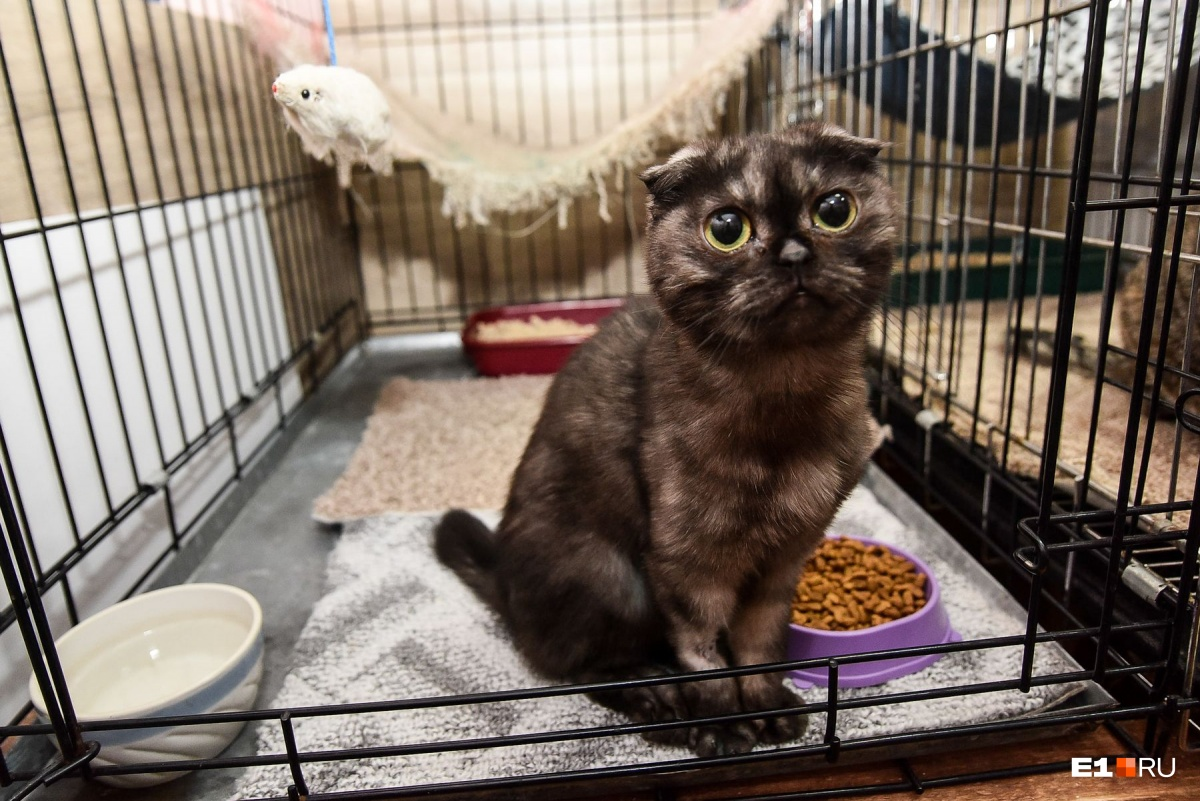 Котики — хищники, даже если выглядят слишком мимимишными