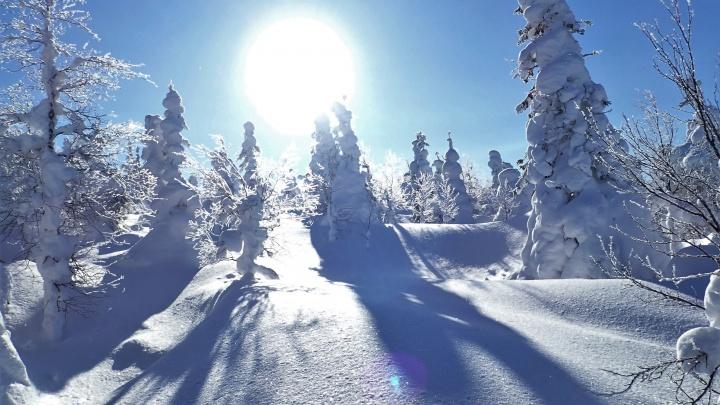 80 километров на лыжах: в свердловском заповеднике пересчитали росомах, лосей и белок
