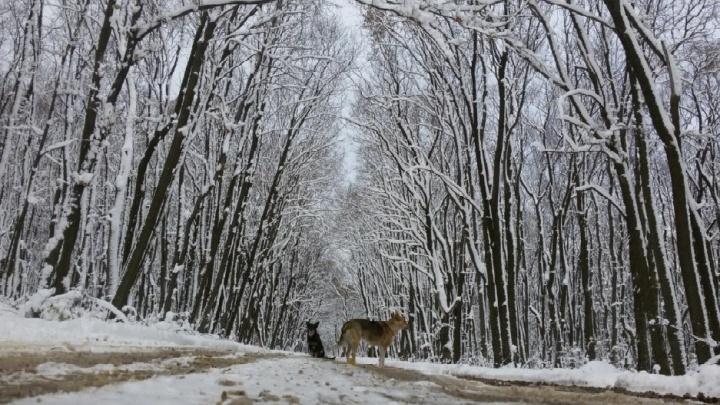 В Самаре начали сбор предложений по развитию парка 60-летия Советской власти