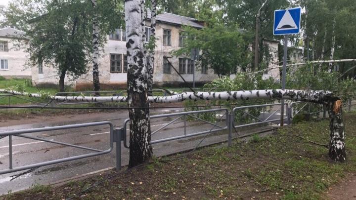 Не выйти и не проехать: в Прикамье сильный ветер повалил деревья на дорогах и во дворах