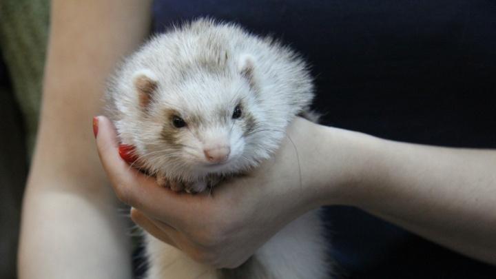 «Это пытка для животных»: в Перми пройдёт акция против контактных зоопарков