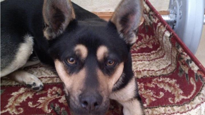Уфимец спас собаку, замерзавшую на улице