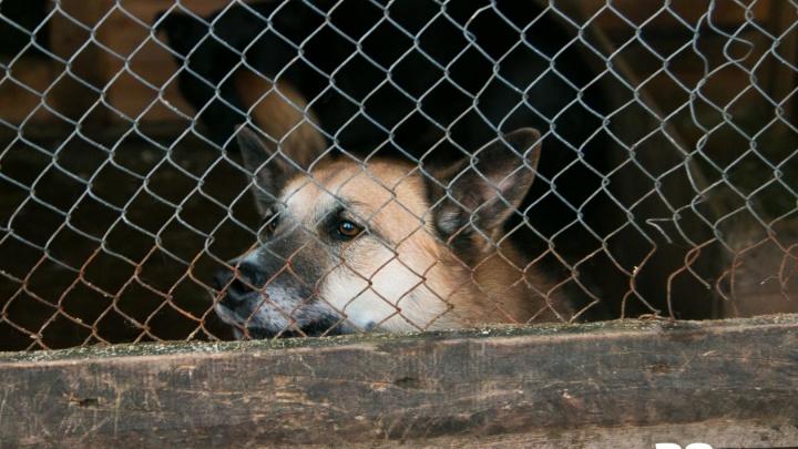 Зоозащитники Поморья возьмутся за гуманизацию отлова бездомных животных
