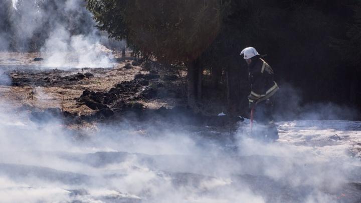 Новосибирцам запретили жечь костры в лесах