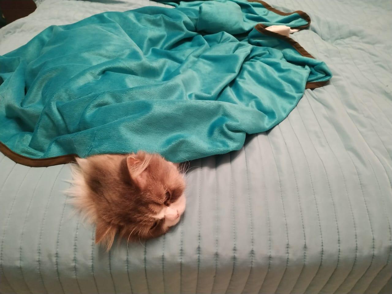Коты категорически отказываются отходить от обогревателей и тёплых одеял