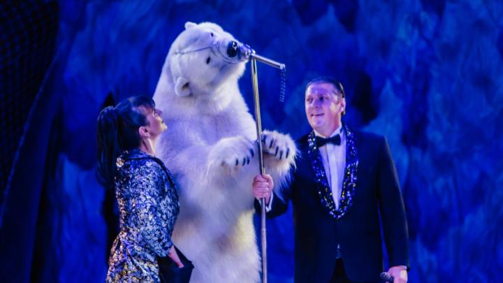 В Перми покажут шоу белых медведей. Они танцуют и «поют», а зоозащитники негодуют