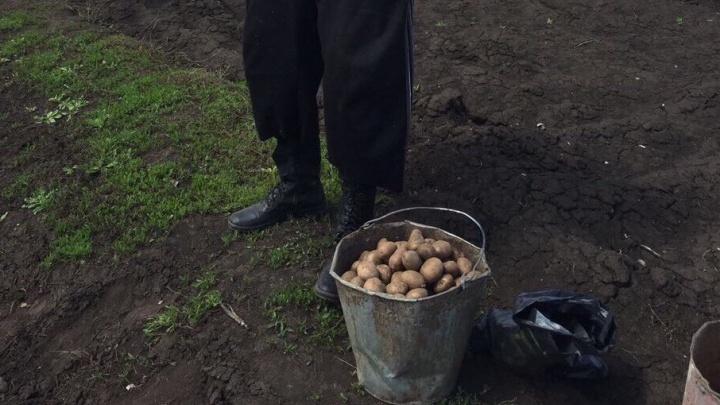 В Башкирии выращивают картофель из пробирки