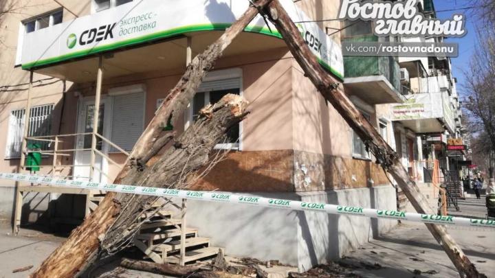 В Ростове упавшее дерево повредило провода