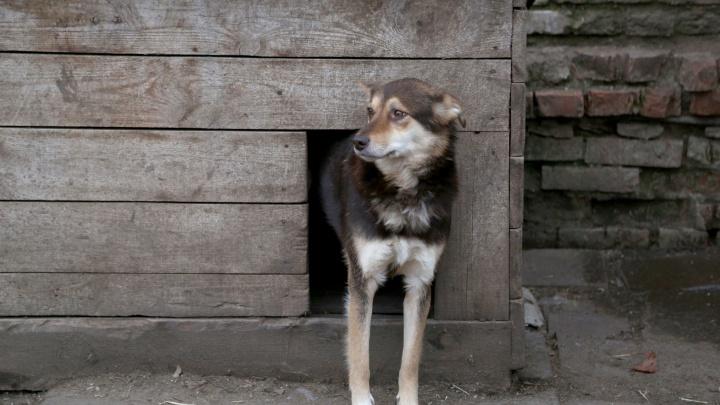 У жителя Стерлитамака выкрали более миллиона рублей. Деньги он прятал в собачьей будке
