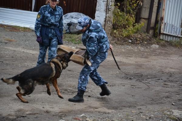 Кинологии УФСИН Зауралья провели для курганских школьников показательные выступления служебных собак