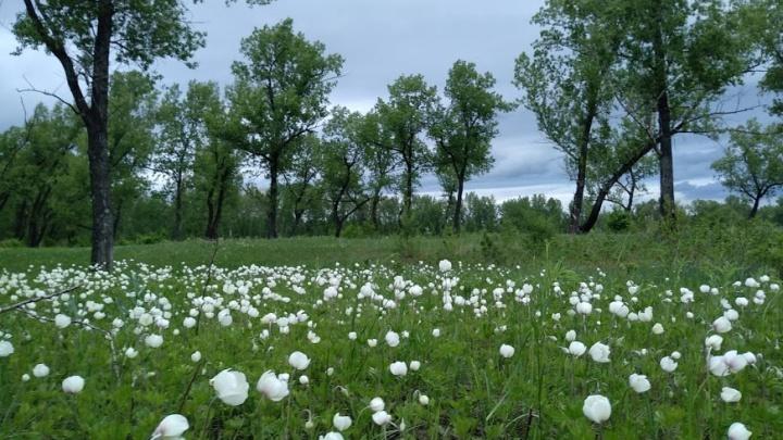После жарких выходных в Красноярск придут небольшое похолодание и дожди