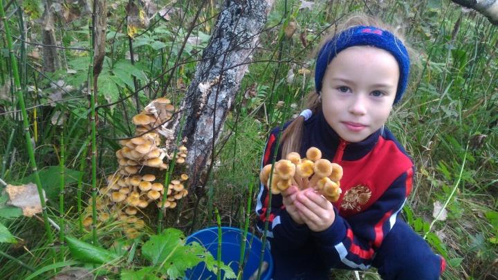 Едем за опятами: карта грибных мест под Новосибирском