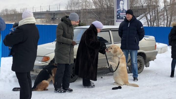 У ДОСААФа собрались возмущённые сносом спортивных площадок родители и собаководы