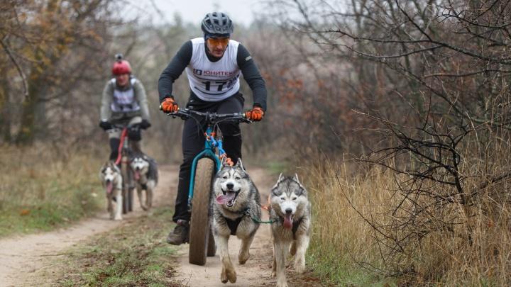 «Будет биатлон»: в Волгограде отменили гонки с собаками по «Шелковому пути»