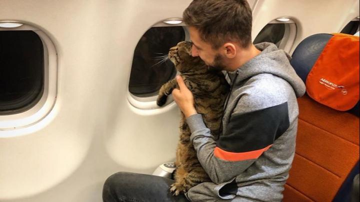 Красноярцы показали своих толстых котов в поддержку хозяина кота Виктора, которого не пустили в самолет