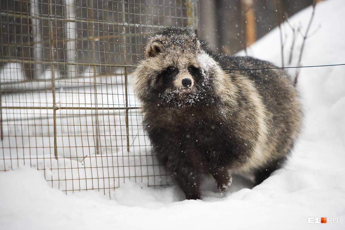 В дикой природе осторожность спасает таким животным жизнь