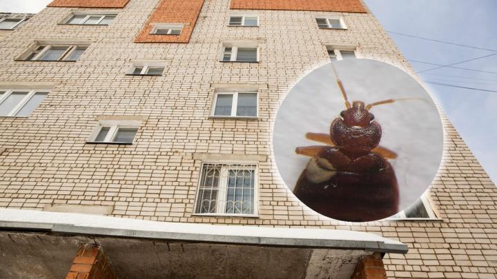 Энтомолог: в Ярославле появились тропические клопы