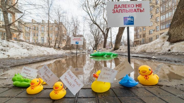 В огромную лужу недалеко от администрации Свердловского района выпустиликрокодила и уточек