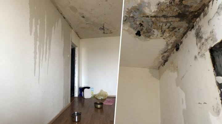 «Плесень и потоки воды»: челябинка больше года воюет с управляющей компанией из-за протекающей крыши
