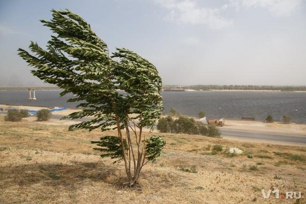 Волгоград начинает осень с сильного ветра