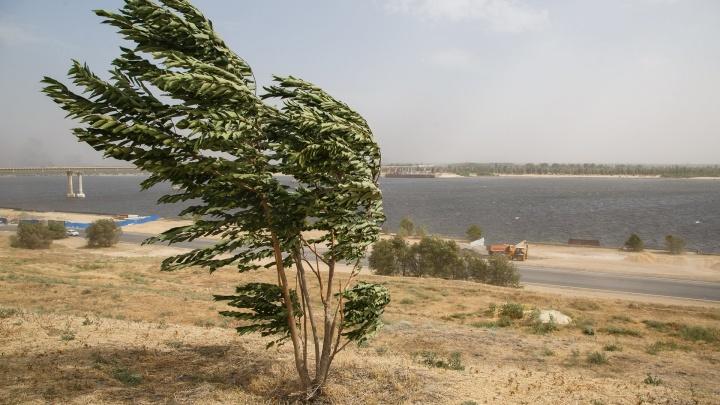 Навстречу осени: Волгоград до конца недели продует сильными ветрами