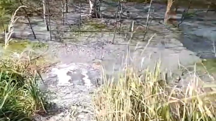 Зловонное болото в Дзержинске образовалось из-за самовольного подключения к фекальному коллектору