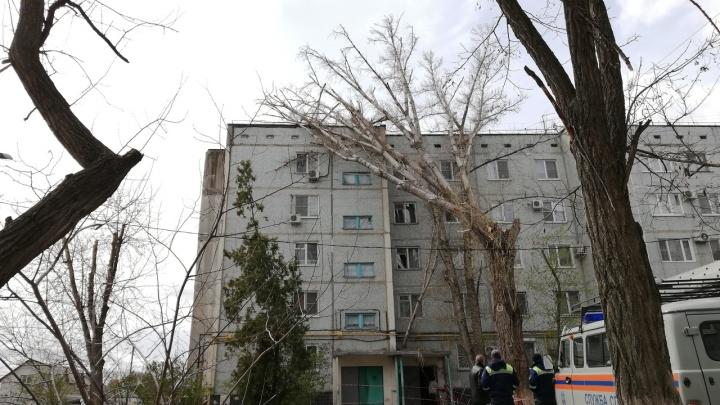 «Только подумали, и оно рухнуло»: в Волгограде упавшее из-за ветра дерево заблокировало жилой дом