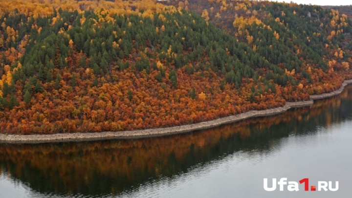 Мечта дровосека: шесть вопросов о башкирском лесе и том, каким он будет через 10 лет