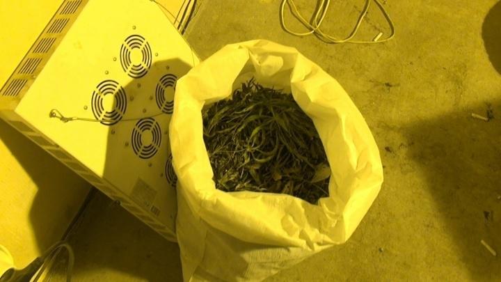 Полицейские поймали екатеринбуржца, который хранил дома 25 килограмм конопли