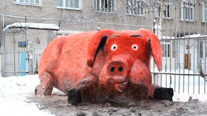 «Есть творческий потенциал»: коряжемские осужденные возвели в колонии трехметровых снежных свиней