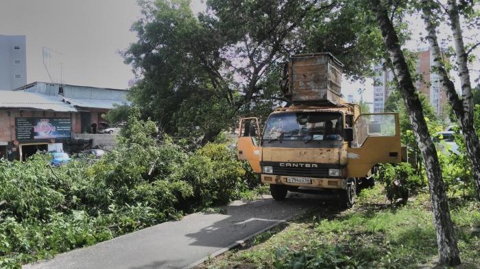 Вырубка деревьев в сквере 40-летия Победы