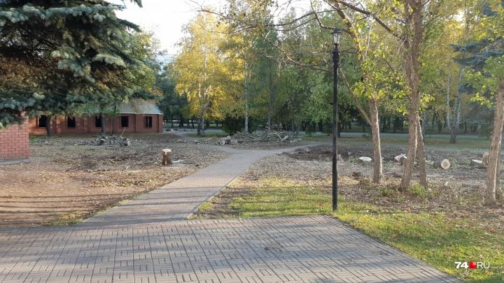 «Варварски пилят здоровые деревья»: челябинцев обеспокоила вырубка в Саду Победы