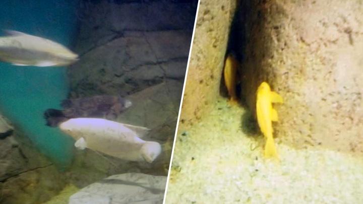 Финишная прямая: в самарском океанариуме назвали время открытия