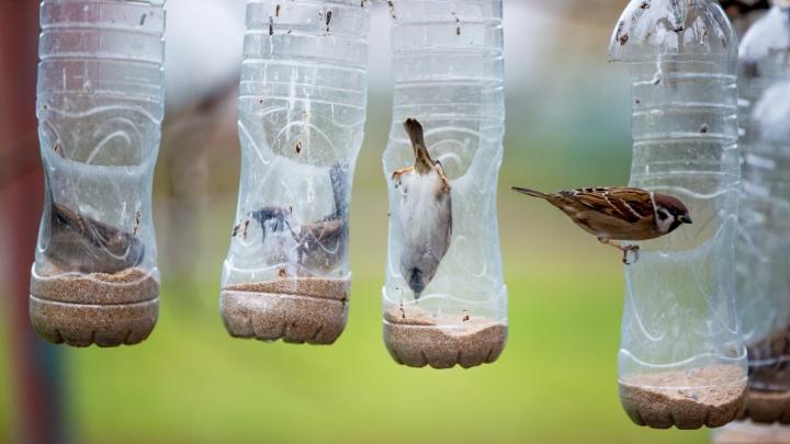 В Ярославле пенсионерка каждый день наполняет крупой 16 бутылок, чтобы спасти птиц от голода