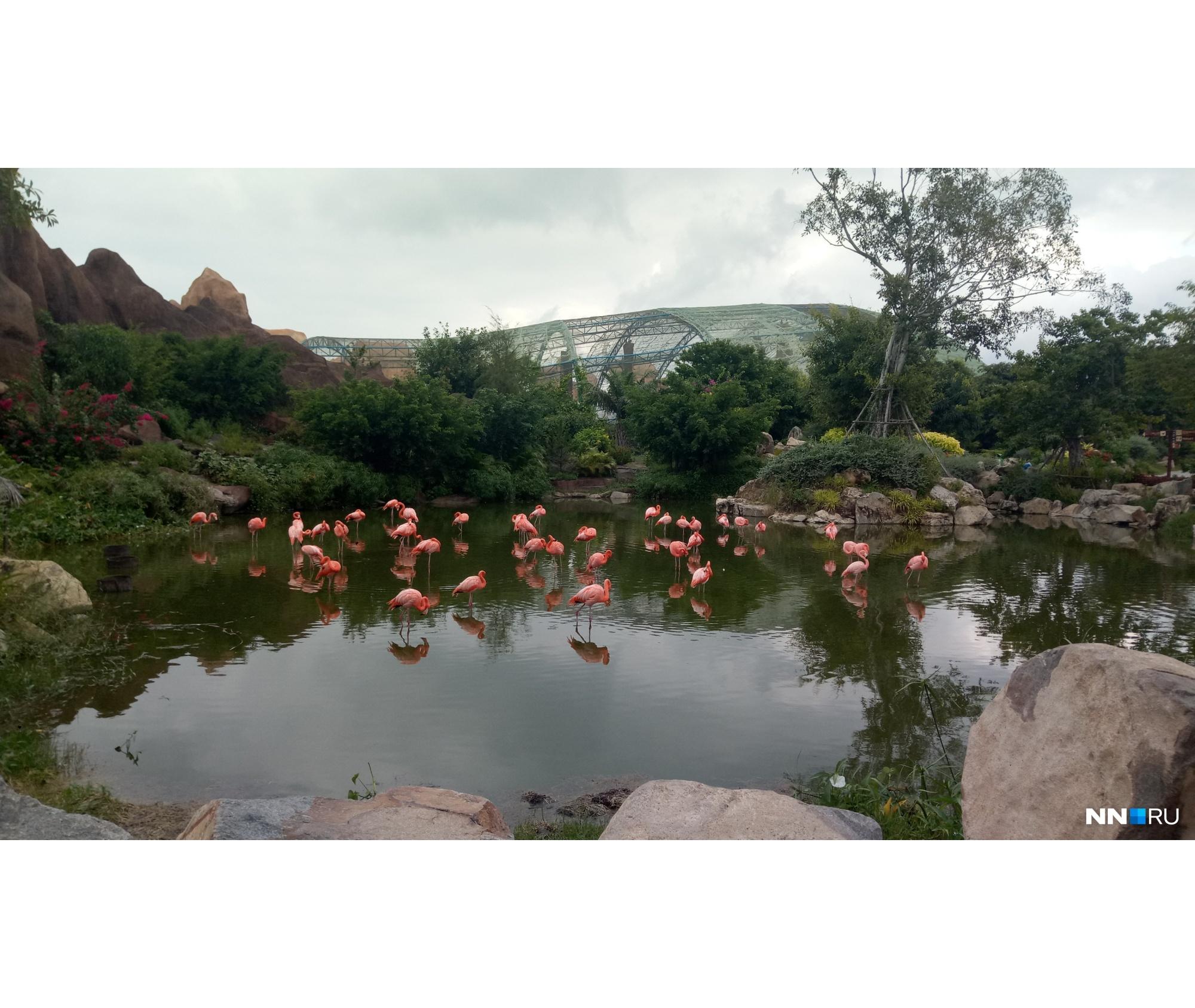 Искусственный пруд с фламинго<br>