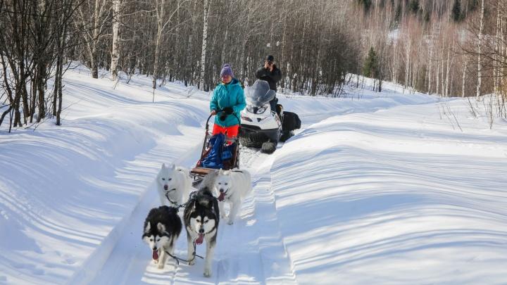 Уральские учёные проехали 120 километров на собачьих упряжках, чтобы найти затонувшие сто лет назад пушки