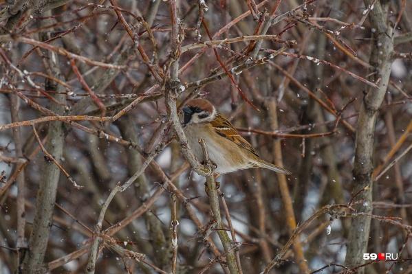 Городским птицам придется сложней всего в первые холодные дни и ночи