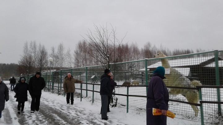 Таковы правила? В ярославском зоопарке отказались бесплатно пропустить пенсионеров к экзотариуму