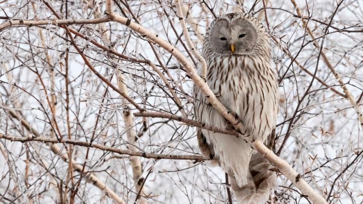 Двое новосибирцев придумали туры для любителей смотреть на птиц
