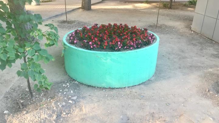 «Это в центре постоянно ноют, а мы довольны»: на месте павильонов волгоградского рынка выросли цветы