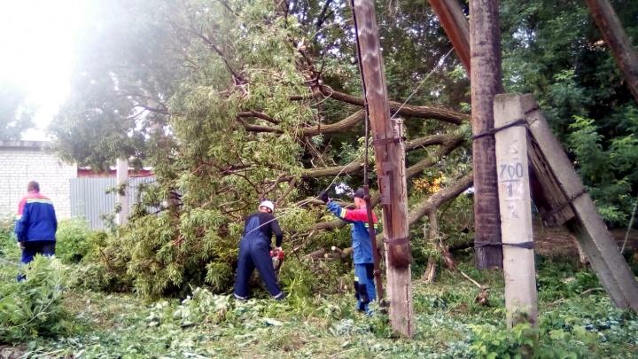 В поселке Кряж гнилое дерево оборвало провода ЛЭП
