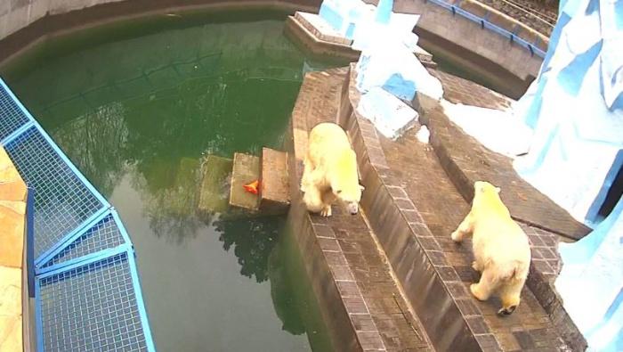 В зоопарке отмечают «День медведя»