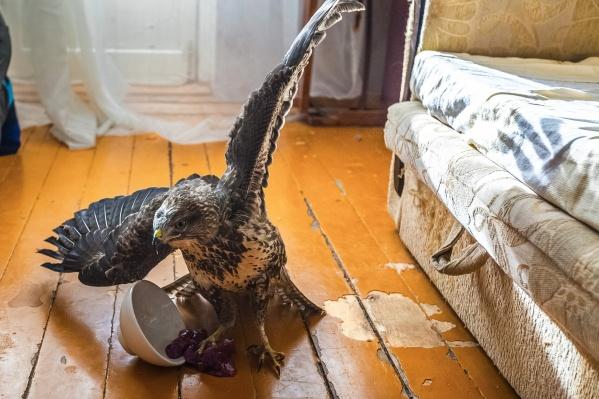 Тот, для кого попугайчики — попса, заводит дома настоящих хищников