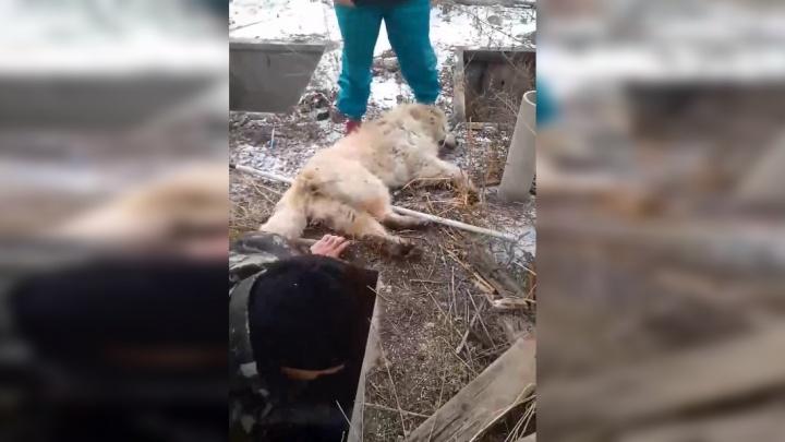 «Никто не хотел помогать»: из бесхозной ямы волонтерам пришлось вытаскивать охрипшего от лая пса