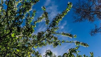 В Прикамье ожидается похолодание. Публикуем прогноз погоды на конец июля