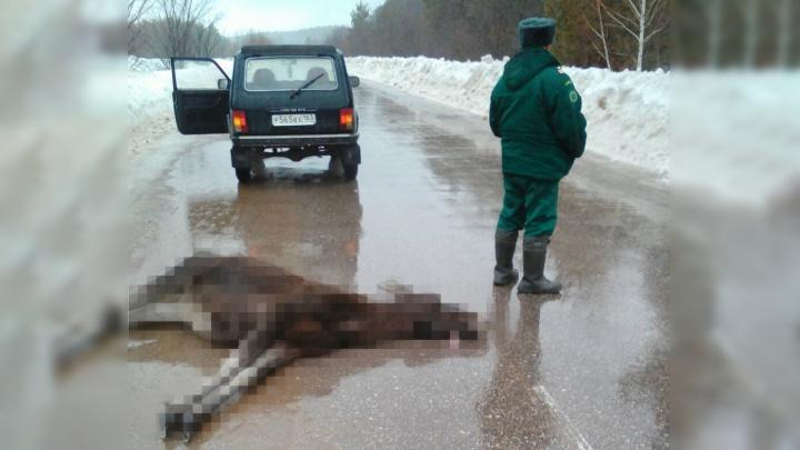 Лежал на дороге: в «Самарской Луке» нашли мертвого лосенка