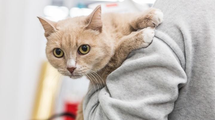 За что вы бросили меня: новосибирцы выстроились в очередь за грустными котиками из подвалов