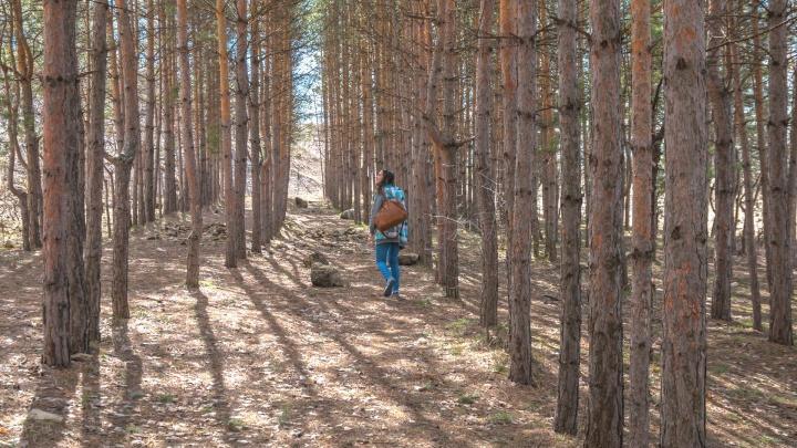 В особо крупном размере: жителя Самарской области оштрафовали за пять срубленных сосен