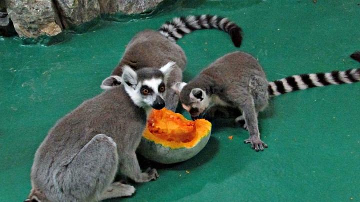 Приятного аппетита: новосибирцы принесли в зоопарк 16 тонн еды для зверей