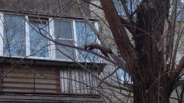 Наглая мордочка: жителей Металлургического района Челябинска разбудила куница